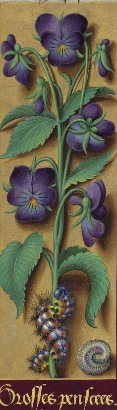 Titre : Horae ad usum Romanum, dites Grandes Heures d'Anne de Bretagne Date d'édition : 1505-1510 Type : manuscrit Langue : Latin