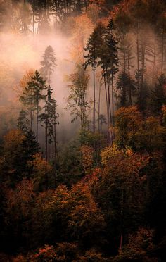 "lori-rocks: ""Ghostly Memories, Mist over Switzerland, by Alexadre Deschau """