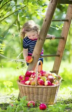 Love this picture of little girl picking apples♥♥♥ Makes me love FALL even more! Children Photography, Family Photography, Apple Orchard Photography, Apple Farm, Apple Harvest, Baby Kind, Fall Photos, Red Apple, Beautiful Children
