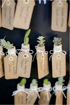 succulent escort cards   chard photographer