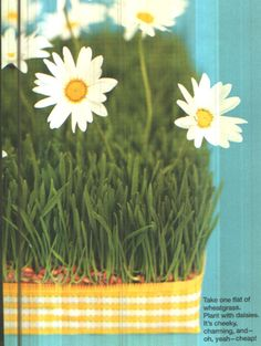 Grass + Daisy Centerpiece fun center piece for Spring Daisy Head Mayzie, Daisy Centerpieces, Diy Ideas, Party Ideas, Happy Flowers, One Fine Day, Grandparents Day, Rehearsal Dinners, Daisies