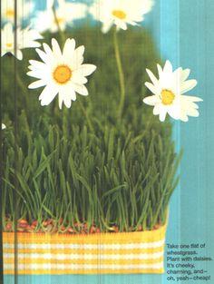 Grass + Daisy Centerpiece