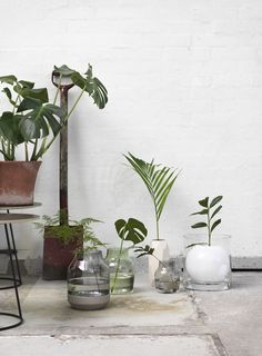Scandinavian interior inspiration from Muuto: A form in mouth blown glass, the Silent Vase is Scandinavian design at its subtlest. Available in two sizes and multiple colors, the Silent Vase is a humble yet decorative addition to any space. Indoor Garden, Indoor Plants, Outdoor Gardens, Traditional Vases, Garden Types, Green Plants, Ikebana, Scandinavian Design, Scandinavian Interiors
