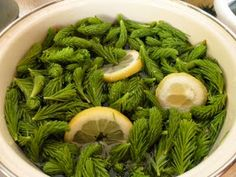 A MAGYAROK TUDÁSA: Gyógyító növényeink 1./b rész Seaweed Salad, Green Beans, Vegetables, Ethnic Recipes, Food, Lilac, Veggies, Essen, Vegetable Recipes