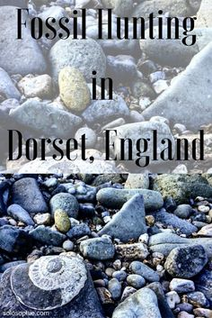How to go fossil hunting in Dorset: a quick guide Vacation Trips, Dream Vacations, Vacation Ideas, Travel Around The World, Around The Worlds, Fossil Hunting, Lyme Regis, Jurassic Coast, European Destination