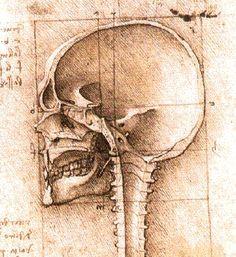 Etude d'un crâne de profil_ 1489