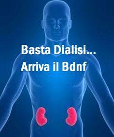 #Dialisi addio… Ecco la nuova frontiera del #Bdnf: sostanza che ripara i danni Renali! Ecco cos'è http://jedasupport.altervista.org/blog/attualita/dialisi-reni-addio-arriva-il-bdnf/