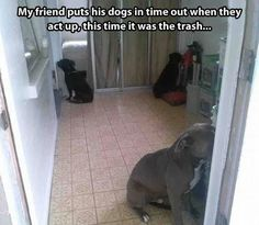 aww lol and they actually listen!! lol cute..better then physical contact for a lesson