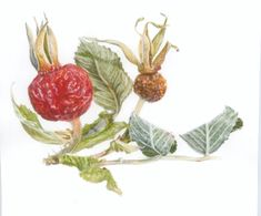 Botanical art, watercolor Botanical Illustration, Botanical Art, My Arts, Watercolor, Plants, Animals, Etsy, Art, Pen And Wash