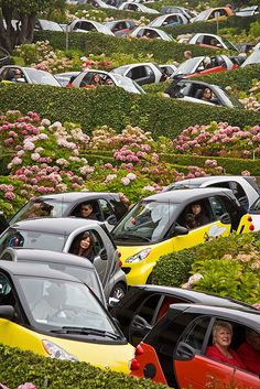 Smart Cars Rally on Lombard Street, San Francisco. This is a real photo not photo-shopped. This street has 8 hairpin curves within 1 city block. Many photos of Lombard St. Russian Hill, SanFrancisco, CA. San Francisco California, California Dreamin', Northern California, Smart Auto, Smart Fortwo, Smart Car Body Kits, Lombard Street, San Fransisco, Small Cars