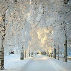 Seldom do we have winters this beautiful