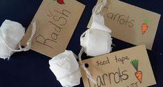 Tui Garden | How to make seed tape - Diamond Harbour School