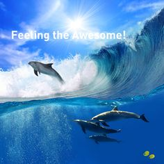 Feeling the Awesome!