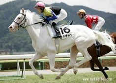 Pinto Thoroughbreds: White Vessel, a Shirayukihime daughter - also a descendent of Shenanigans by Icecapade the half-brother of Ruffian. Most Beautiful Animals, Beautiful Horses, Curly Horse, Horse Facts, Thoroughbred Horse, Racehorse, White Horses, Horse Head, Horse Breeds