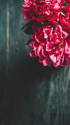 Pink Flower aesthetic and Ferris Wheel in beautiful garden. Pink Flower aesthetic and Ferris Wheel in beautiful garden. Flor Iphone Wallpaper, Pink Wallpaper, Cellphone Wallpaper, Beautiful Flowers Wallpapers, Beautiful Nature Wallpaper, Pretty Wallpapers, Flower Background Wallpaper, Cute Wallpaper Backgrounds, Flower Aesthetic
