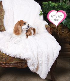 "Peluche Plush Powder Puff Ivory Throw Blanket 50"" x 60"""