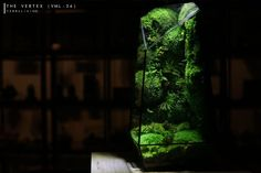 Pre-order: The Vertex ZERO L Pre-designed Completed | Etsy Rare Roses, Big Battle, Moss Terrarium, Moss Wall, Door Steps, Glass Vessel, Lights Background, Show Photos, Natural Disasters