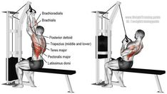Close neutral grip lat pulldown. A compound and pull exercise. Target muscle: Latissimus Dorsi. Synergistic muscles: Brachialis, Brachioradialis, Teres Major, Posterior Deltoid, Rhomboids, Levator Scapulae, Middle and Lower Trapezii, Sternal Pectoralis Major, and Pectoralis Minor.