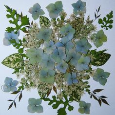 Pressed Flowers, Loose Flowers for Crafting, Assemblage, Blues, Whites and Greens