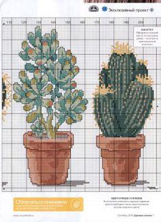 Cactus (2/2)