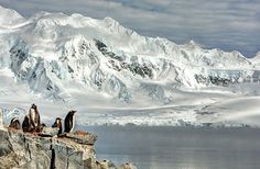smithsonian-photo-contest-naturalworld-bird-penguins-arctic-glacier-neal-piper