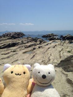 クマ散歩:三浦・岩礁のみちに品行方正なクマ出没 (間口湾 Maguchi Bay) The Bear took a walk along Miura Reef!♪☆(^O^)/  #品行方正 #Bear #湾
