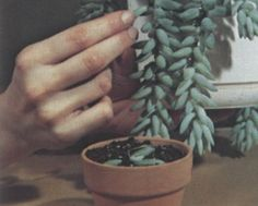 This is a very informative article about propagation.   How to divide succulents