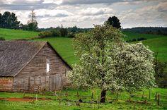 El granero y el arbol - Region de Los Lagos (Patagonia - Chile)