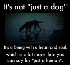 """S/He's not """"just"""" a dog.  Remember -- dog is Love."""
