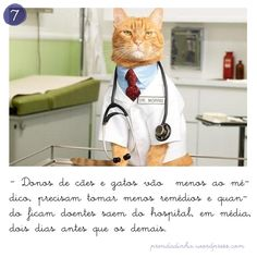 animais fazem bem à saúde