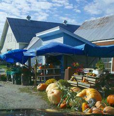 Roadside stop for a pumpkin along the way to Leeds, Maine.
