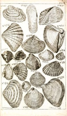 LOADS of FREE Printables on this site!  Vintage sea shell print