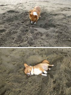 This dog who dug himself his very own nap hole.