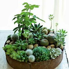 kübelpflanzen sukkulenten garten und pflanzen