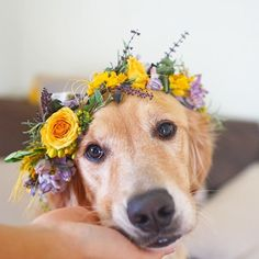 If you're a Dog Lovers, check out this Dogs collection, you may like it :) Here's link ==> https://www.sunfrog.com/tuanldshirt/dogs  #dogs #ilovedogs