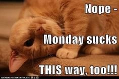 Monday Sucks this way
