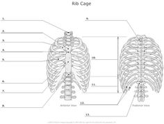 anatomy and physiology skeleton fill in - Google Search