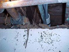 Pest and bug control, including termite control. Signs Of Termites, Types Of Termites, Termite Inspection, Termite Control, Bug Control, Melbourne, Pictures, Photos, Grimm