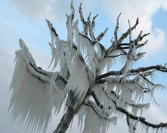 Frozen tree    (image credit: skyandsummit)