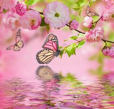 Hermosas Flores Spring BlossomSpring FlowersWallpaper
