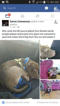 Danielle Sebben‎DOGS- CT Lost/Found Dogs April 11  ·    Dog was found Found this on my news feed figured I'd share!! Dog was stolen!!