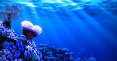 underwater anime - Google Search