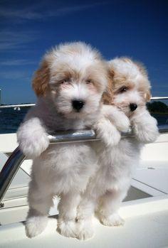 Sailing cotons