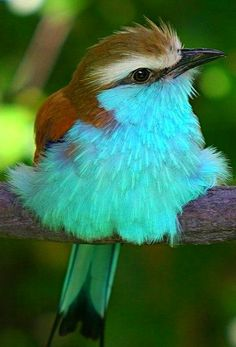 59  AWW!! SO INCREDIBLY BEAUTIFUL WITH THE MOST AMAZING COLOUR COMBO!!