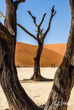 Tree Framed by a Tree - Namib-Nakluft National Park, Namibia