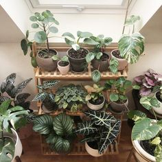 Indoor Vertical Gardening Tips and Ideas Organic gardening isn't always about food to eat. Some people enjoy growing flowers and other forms of plant life as well. You can grow anything bereft of harmful chemicals as long as you're d Large Plants, Potted Plants, Indoor Plants, Foliage Plants, Hanging Plants, House Plants Decor, Plant Decor, Deco Cactus, Ti Plant