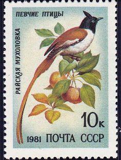 1981 Russian Stamp, Scott No 4973, Song Bird, Tersiphone Paradisi