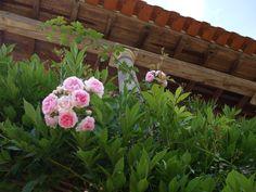 Quinta da Casa Velha - Agroturismo 2490-715 Ourém PORTUGAL Tel: +351 914511519 geral@quintacasavelha.com - Near Fátima, Tomar, Leiria, Batalha, Alcobaça