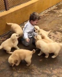 Cute Funny Animals, Cute Baby Animals, Funny Cute, Funny Dogs, Animals And Pets, Cute Cats, Funny Memes, Animals Photos, Top Funny