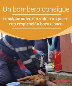 Un bombero consigue #salvar la vida a un perro con respiración boca a #boca  Una #noticia sorprendente. Un #bombero salvó al dueño del animal del incendio de su #vivienda y no dudó en volver a por el can para salvar la #vida también del animal.